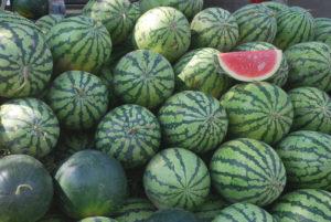 elixír z melounu na erekci