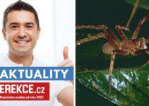 pavoučí jed na erekci