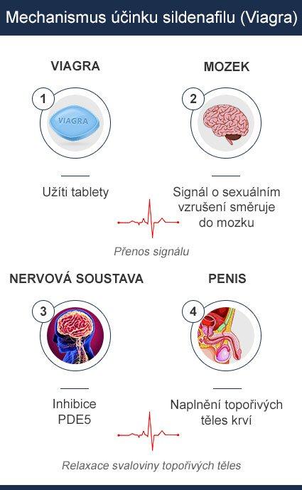 mechanismus účinků sildenafilu