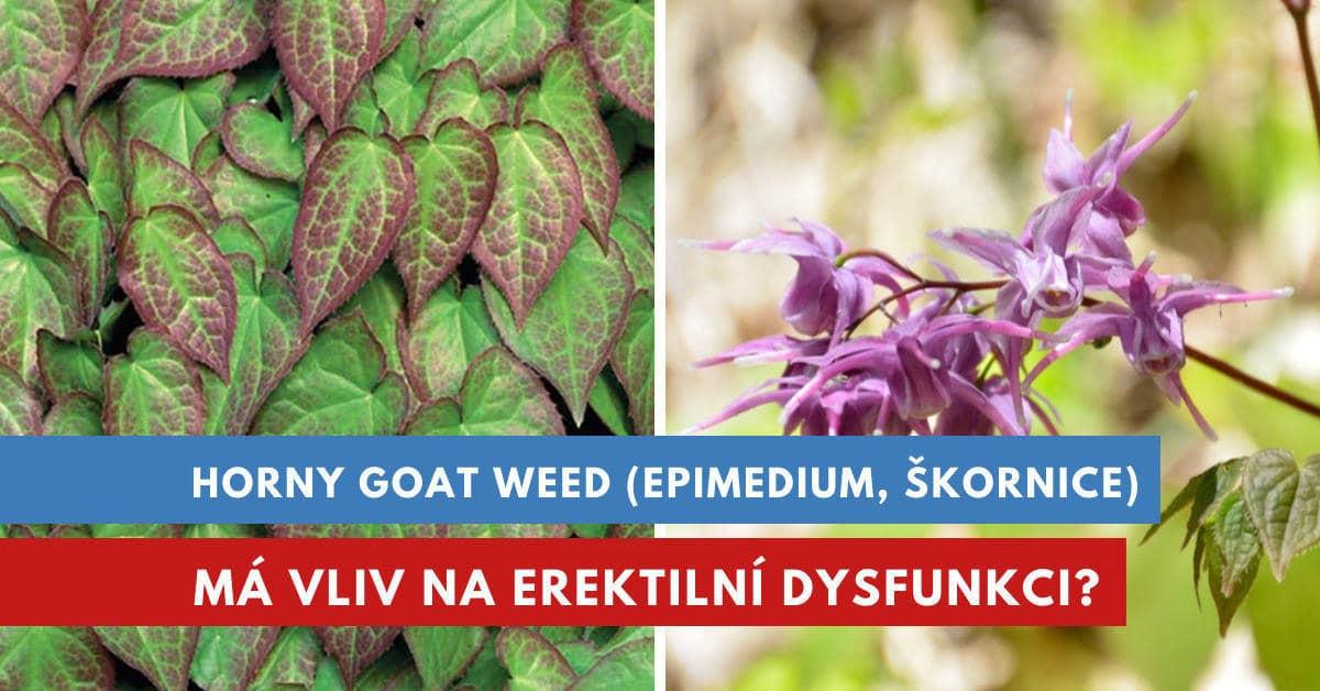 Škornice šípolistá, Epimedium, Horny goat weed