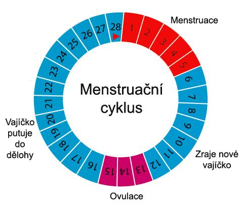 menštruačný cyklus