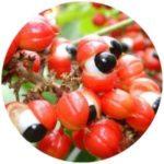 guarana, ženské afrodiziakum