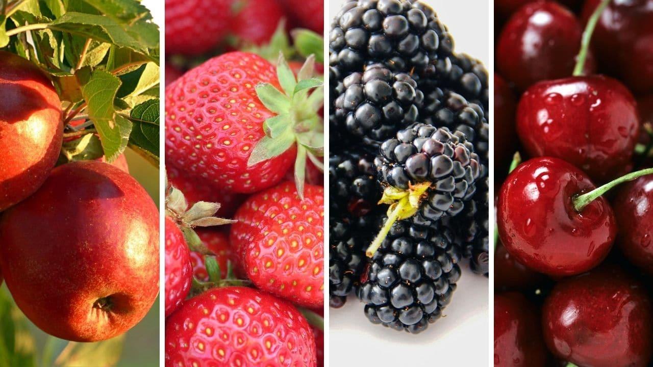 jablko, jahody, ostružiny a třešně pro podporu libida