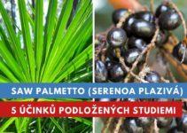 Saw palmetto, účinky