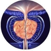 doplňky pro zdraví prostaty