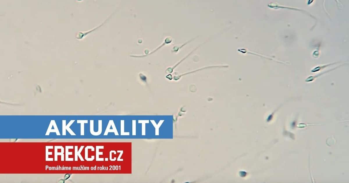 kmenové buňky spermií z laboratoře