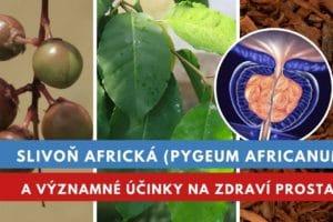 Slivoň africká, účinky na prostatu